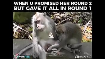 monkey pussy pornobrandi belle anal creampie