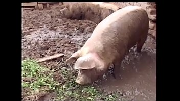 Very fat mature whore gets fucked at the pig place